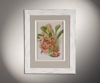 Орхидеи 6