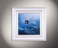 Aqua 12