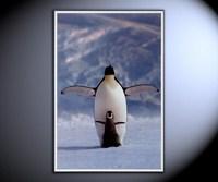 Пингвины - зарядка
