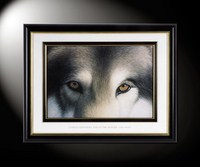 Eyes jf the Hunter: Gray Wolf
