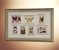 Бабочки (сборка) 2