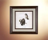 Owls 9