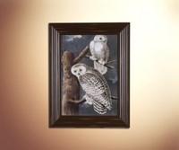Owls 13