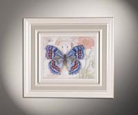 Бабочки 5