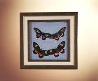 Бабочки 15