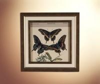 Бабочки 16