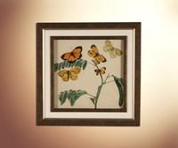 Бабочки 17