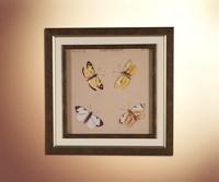 Бабочки 19