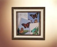 Бабочки 20