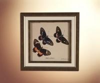 Бабочки 21