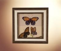 Бабочки 22