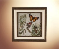 Бабочки 23