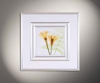 Flower Spirits 1