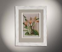 Орхидеи 2