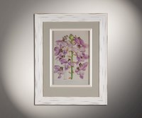 Орхидеи 10