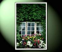 Окно зеленое